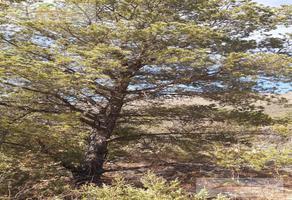 Foto de terreno habitacional en venta en  , arteaga centro, arteaga, coahuila de zaragoza, 18837018 No. 01