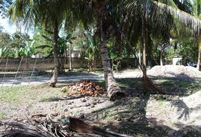 Foto de terreno habitacional en venta en avenida méxico lote 3 manzana 3 sin número , lópez subteniente, othón p. blanco, quintana roo, 19352154 No. 01