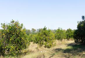 Foto de terreno habitacional en venta en azahar , montemorelos centro, montemorelos, nuevo león, 0 No. 01