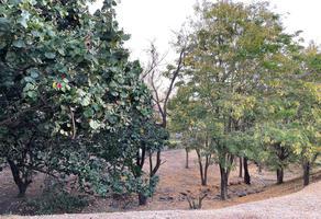 Foto de terreno habitacional en venta en bosques de zapopan 170, bosques de san isidro, zapopan, jalisco, 0 No. 01