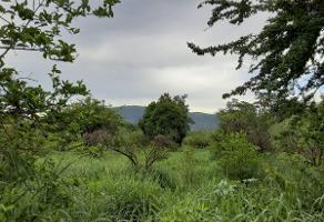 Foto de terreno habitacional en venta en bugambilias , maravillas, jiutepec, morelos, 0 No. 01