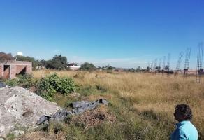 Foto de terreno habitacional en renta en callejon del cedro , el zapote del valle, tlajomulco de z??iga, jalisco, 6256806 No. 02
