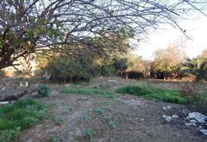 Foto de terreno comercial en venta en camino vecinal , cañón del padre, tijuana, baja california, 0 No. 01