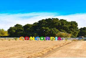 Foto de terreno habitacional en venta en camino vecinal el hongo-ojos negro , tecate centro, tecate, baja california, 18477286 No. 01
