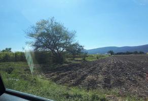 Foto de terreno habitacional en venta en campo chamilpa , diego ruiz, yautepec, morelos, 6600857 No. 01