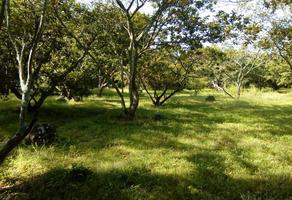 Foto de terreno habitacional en venta en carretera alpeyuca - miacatlán , el rodeo, miacatlán, morelos, 18652005 No. 01