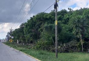 Foto de terreno industrial en venta en carretera cancún - puerto morelos , puerto morelos, benito juárez, quintana roo, 0 No. 01