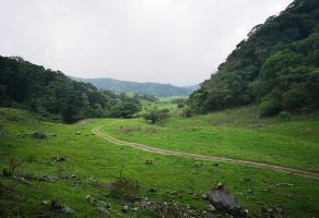 Foto de terreno habitacional en venta en carretera comala - san josé del carmen kilometro 19 , san antonio, comala, colima, 0 No. 01