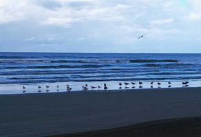 Foto de terreno habitacional en venta en carretera federal #15 mazatlan nayarit , playa novillero, tecuala, nayarit, 15943464 No. 01