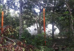 Foto de terreno habitacional en venta en carretera federal kilometro a aldea coral 22, ciudad chemuyil, tulum, quintana roo, 0 No. 01