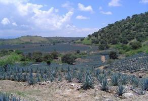 Foto de terreno habitacional en venta en carretera gdl-tepic , amatitan, amatitán, jalisco, 6199990 No. 01