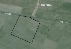 Foto de terreno habitacional en venta en carretera tala ameca , ingenio, tala, jalisco, 0 No. 01