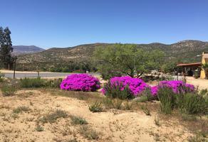 Foto de terreno habitacional en renta en carretera tecate ensenada kilometro 10 , tecate, tecate, baja california, 14600716 No. 01