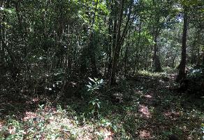 Foto de terreno comercial en venta en carretrera puerto morelos kilometro 8 , puerto morelos, benito juárez, quintana roo, 6810790 No. 01