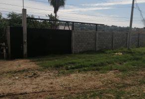 Foto de casa en renta en Los Alamitos, Culiacán, Sinaloa, 15507356,  no 01