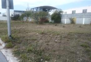 Foto de terreno comercial en renta en  , cerradas de bugambilias, guadalupe, nuevo león, 12463435 No. 01