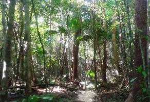 Foto de terreno comercial en venta en chaca , puerto morelos, benito juárez, quintana roo, 4373067 No. 01