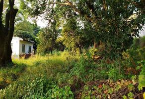 Foto de terreno comercial en venta en  , chamilpa, cuernavaca, morelos, 0 No. 01