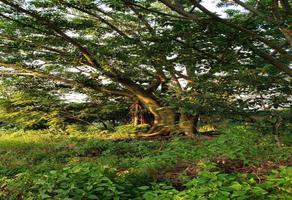 Foto de terreno habitacional en venta en  , chamilpa, cuernavaca, morelos, 6707014 No. 01