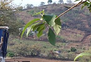 Foto de terreno comercial en venta en  , chisco, tepoztlán, morelos, 0 No. 01