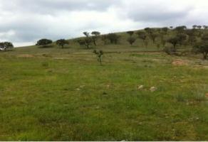 Foto de terreno habitacional en venta en carretera tesistan-col?tlan. , colotlan centro, colotl?n, jalisco, 3982275 No. 02
