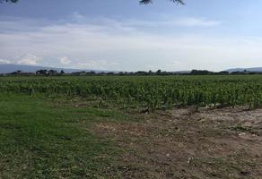 Foto de terreno comercial en venta en concepción del valle , concepción del valle, tlajomulco de zúñiga, jalisco, 15163752 No. 01