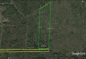 Foto de terreno comercial en venta en  , conkal, conkal, yucatán, 14072745 No. 01