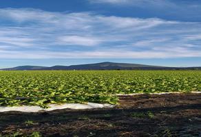 Foto de rancho en venta en cumuatillo , cumuatillo, venustiano carranza, michoacán de ocampo, 18716782 No. 01