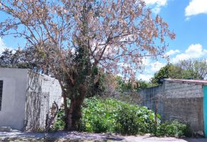 Foto de terreno habitacional en venta y renta en Manuel Avila Camacho, Mérida, Yucatán, 19824700,  no 01