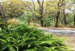 Foto de terreno habitacional en venta en  , del bosque, cuernavaca, morelos, 18393663 No. 01
