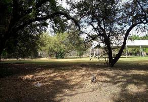 Foto de terreno habitacional en venta en  , delicias, cuernavaca, morelos, 10666152 No. 01