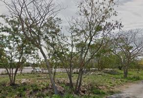 Foto de terreno comercial en venta en  , diaz ordaz, mérida, yucatán, 0 No. 01