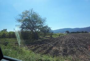 Foto de terreno habitacional en venta en  , diego ruiz, yautepec, morelos, 0 No. 01