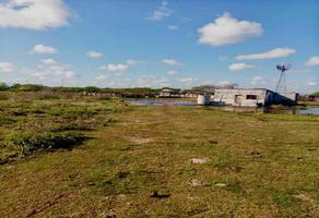 Foto de terreno habitacional en venta en  , dzonot carretero, tizimín, yucatán, 0 No. 01