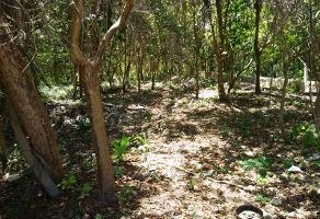 Foto de terreno habitacional en venta en ecosur , infonavit aarón merino fernández, othón p. blanco, quintana roo, 12987299 No. 01