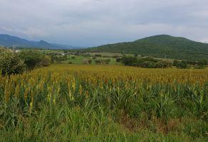 Foto de terreno habitacional en venta en Carmelo Rivera, Mazatepec, Morelos, 9109524,  no 01