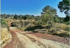 Foto de terreno habitacional en venta en  , el carmen, apizaco, tlaxcala, 18665015 No. 01