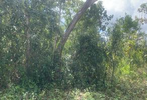 Foto de terreno comercial en venta en el pedregal , supermanzana 532, benito juárez, quintana roo, 0 No. 01