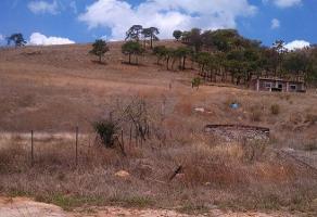 Foto de terreno habitacional en venta en el taray 00 , colotlan centro, colotl?n, jalisco, 5445621 No. 05