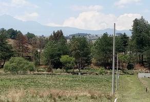 Foto de terreno habitacional en venta en el tepetetal , san francisco tlalcilalcalpan, almoloya de juárez, méxico, 0 No. 01