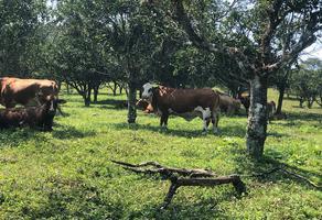 Foto de rancho en venta en entrepalmas , hueytamalco, hueytamalco, puebla, 9672219 No. 01