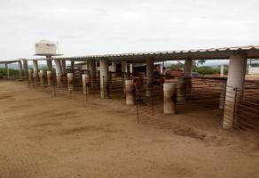 Foto de rancho en venta en finca de la rosa , villa de tututepec de melchor ocampo, villa de tututepec de melchor ocampo, oaxaca, 6427309 No. 01