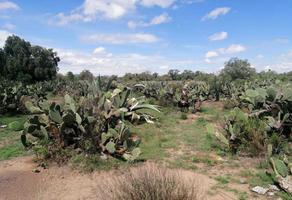 Foto de terreno habitacional en venta en fray francisco tembleque s/n , otumba de gómez farias, otumba, méxico, 0 No. 01