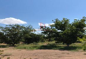 Foto de terreno habitacional en venta en  , granjas del bosque, aldama, chihuahua, 8896688 No. 01