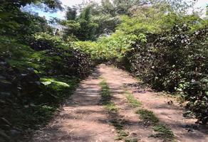 Foto de terreno habitacional en venta en gravilias , la pitaya, coatepec, veracruz de ignacio de la llave, 0 No. 01