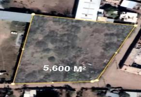Foto de terreno habitacional en venta en  , hidalgo del parral centro, hidalgo del parral, chihuahua, 0 No. 01