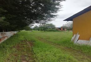 Foto de terreno habitacional en venta en independencia , cerro blanco, pátzcuaro, michoacán de ocampo, 0 No. 01