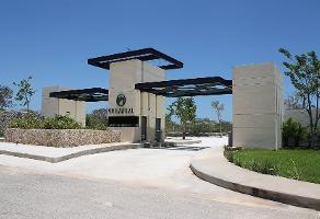 Foto de terreno habitacional en venta en  , jalapa, mérida, yucatán, 0 No. 01