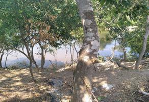 Foto de terreno habitacional en venta en juan de alfaro 1, paso del toro, medellín, veracruz de ignacio de la llave, 0 No. 01