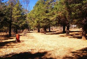 Foto de terreno habitacional en venta en  , la campiña, morelia, michoacán de ocampo, 0 No. 01